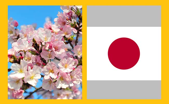 Chrysanthemum and Cherry Blossom — Japan