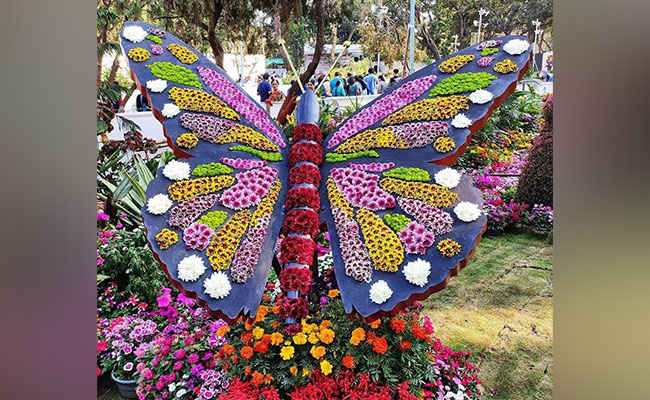 Details Of The Lucknow Flower Show