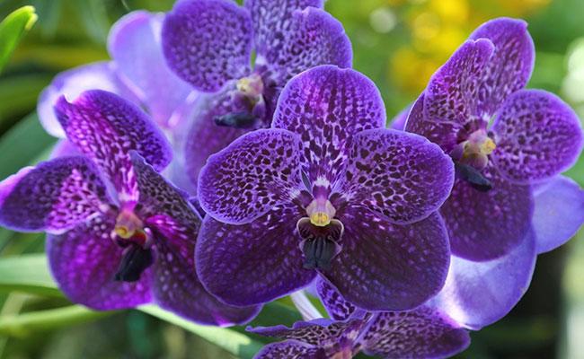 Erotic Orchid symbolizes