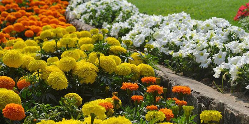 Flower show Kolkata