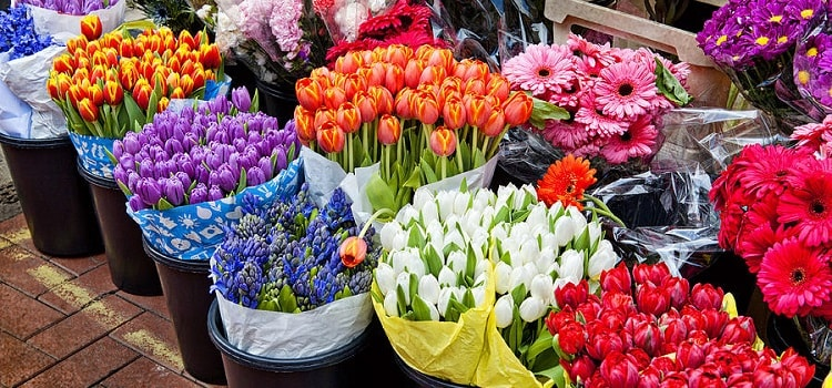 Flower Market in Chandigarh