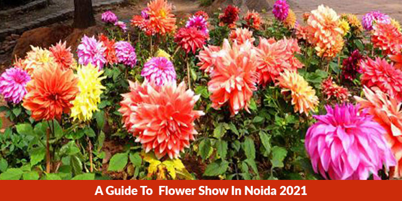 Flower Show In Noida