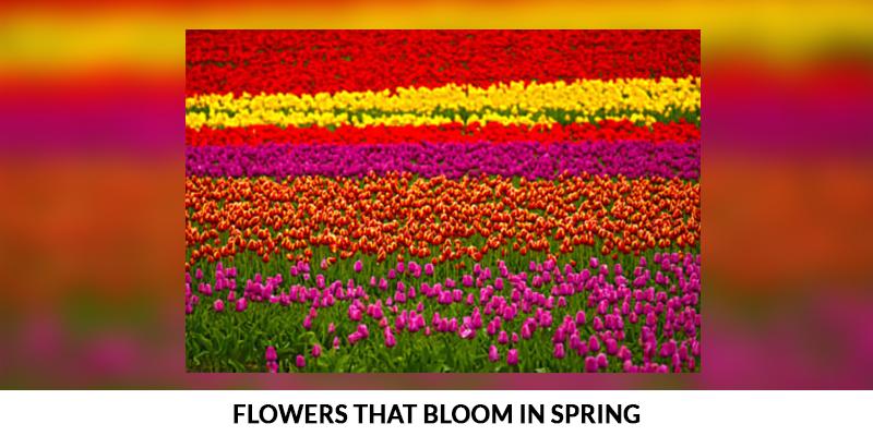 Flowers That Bloom In Spring