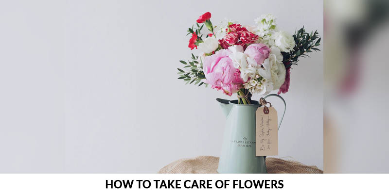 How to take care of flowers