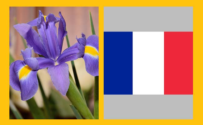 Iris - France