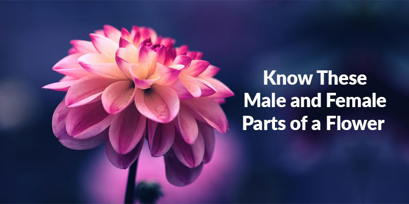 Know These Male and Female Parts of a Flower