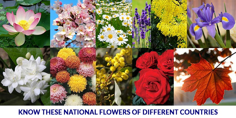 Know these national flowers of different countries