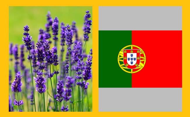 Lavender – Portugal