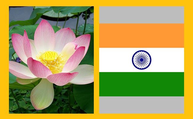 Lotus - India