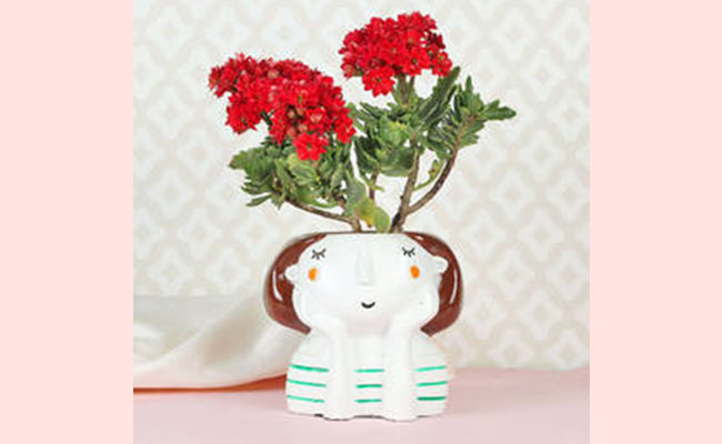 Potted Plants Surprise gift ideas for women's day