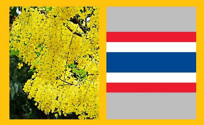 Ratchaphruek – Thailand