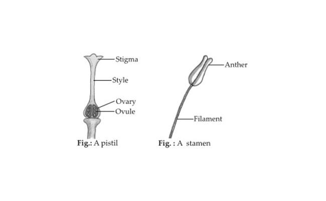 Reproductive Parts