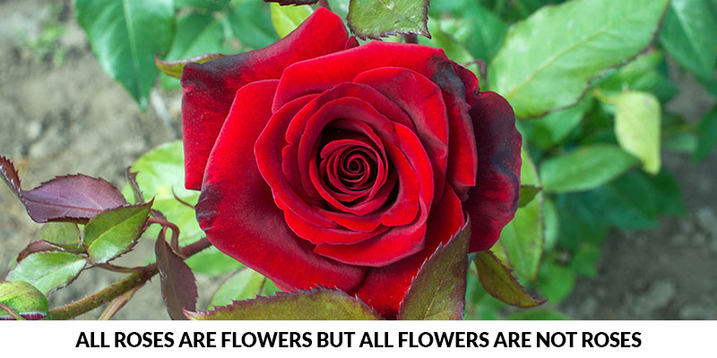 Roses Are Flowers But All Flowers Are Not Roses