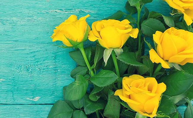 Symbolism Of Yellow Roses
