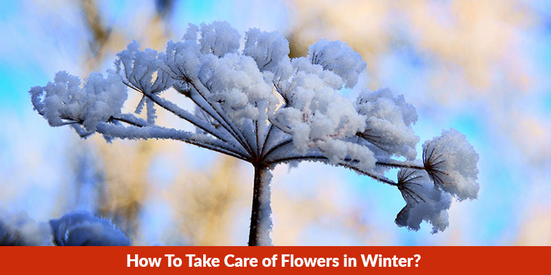 How To Take Care of Flowers in Winter