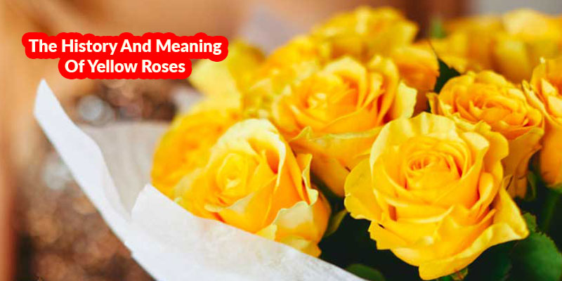 The History And Meaning Of Yellow Roses