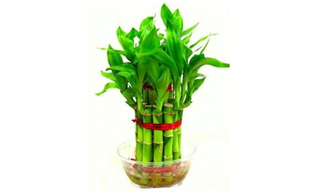 The plants Eco-friendly Gifts