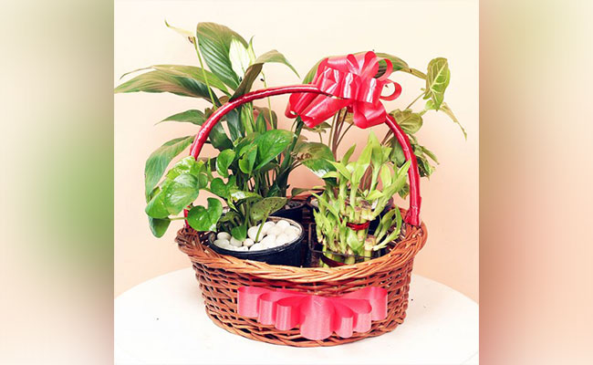 Plants Hamper