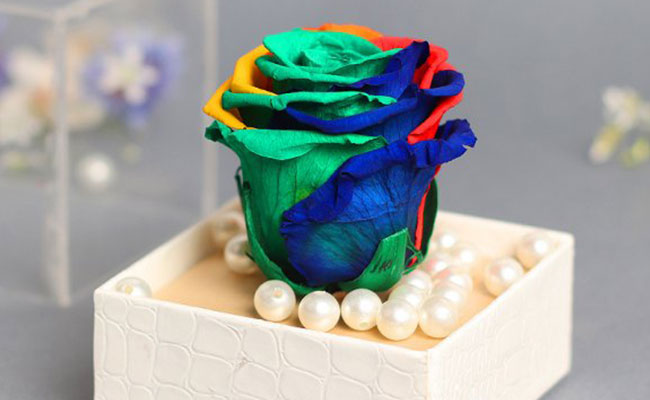 Multi-Coloured Preserved Rose