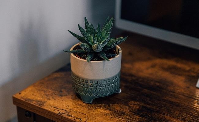 Customised Planter