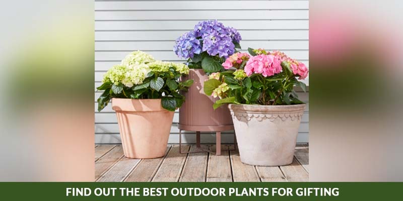 Find Out The Best Outdoor Plants for Gifting