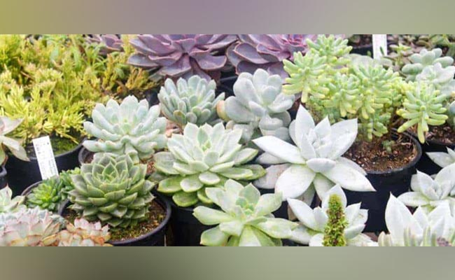 Unique Succulent Arrangement