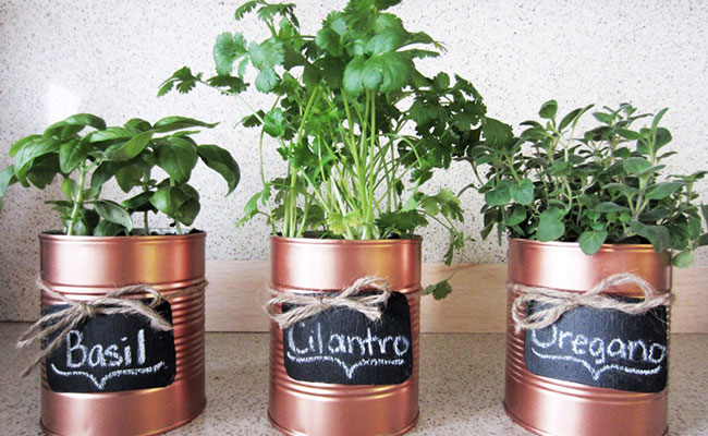 Homemade Personalised Plant