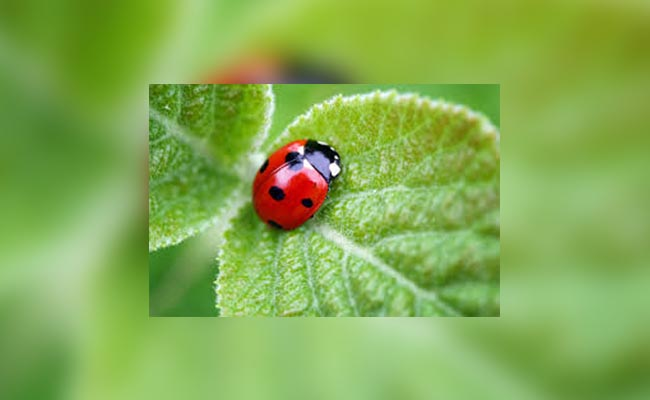 Add Beneficial Insects