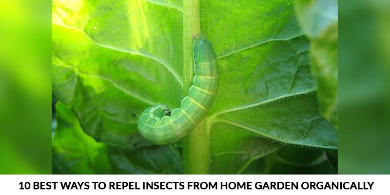 Best Ways To Repel Insects From Home Garden Organically