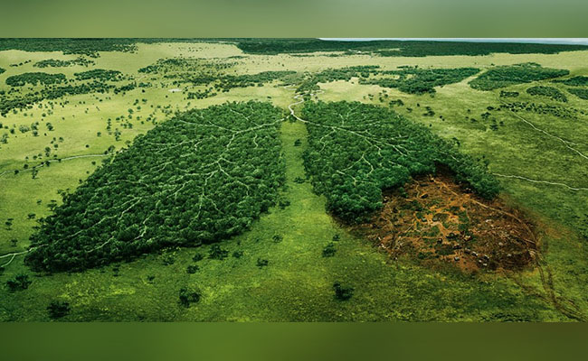 Deforestation can Cause Food Insecurity