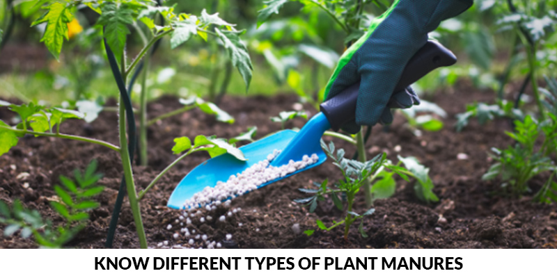 Different Types of Plant Manures