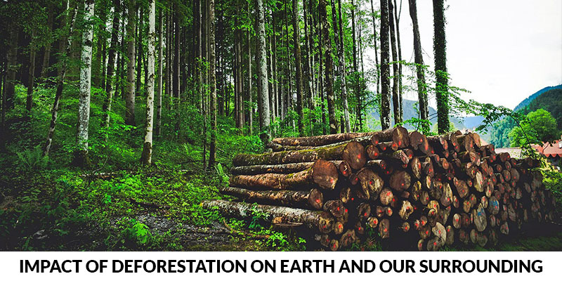 Impact Of Deforestation On Earth And Our Surrounding