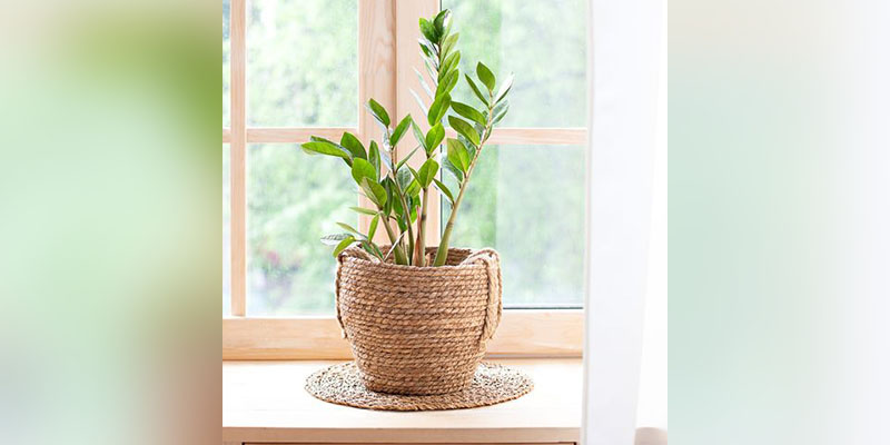 Top 10 Easiest Plant to Grow