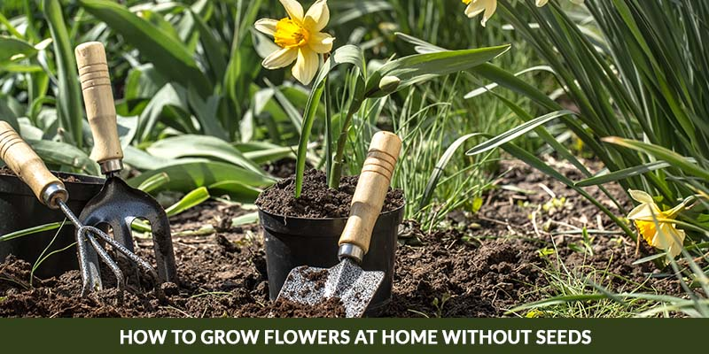 How to grow flowers at home without seeds