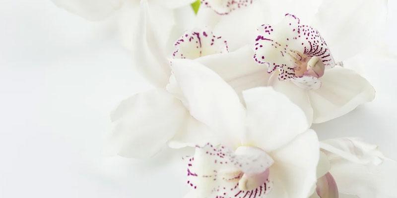 How to Make a Funeral Flower Arrangement