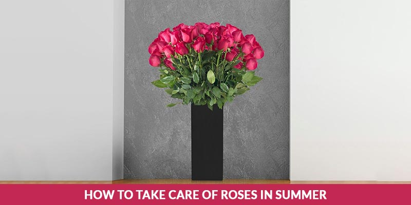 How to Take Care of Roses in Summer