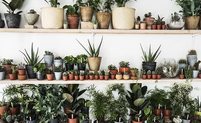 Indoor and outdoor plants For Men