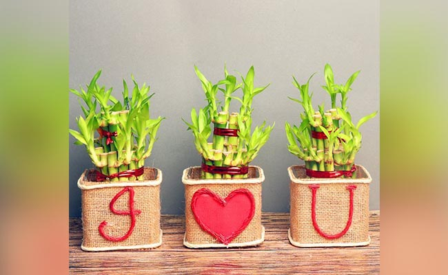 I Love You Plant With Planter