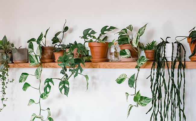 Houseplant Gift for Dad