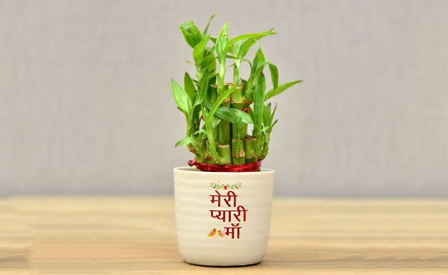 Gift your mom a plant