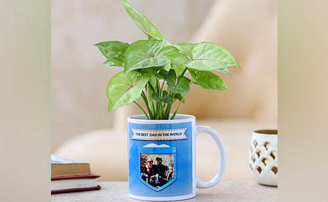 Personalised indoor plant