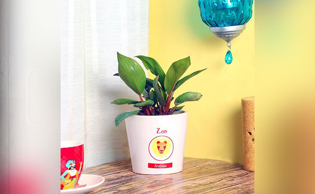 Personalized Zodiac Sign Plant