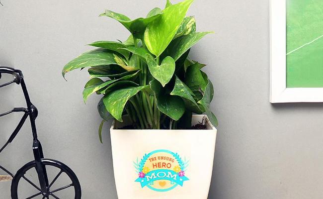 bespoke plants