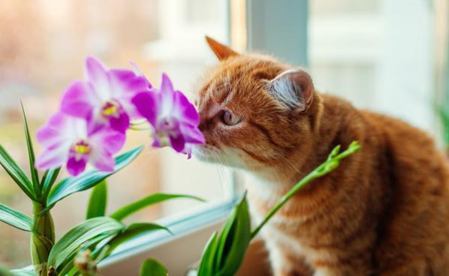 captivated by orchids