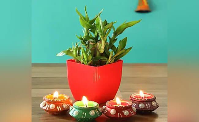 Plant with Diyas