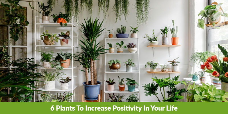 6 Plants To Increase Positivity In Your Life