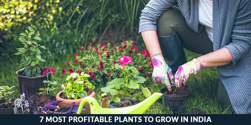 7 Most Profitable Plants To Grow In India