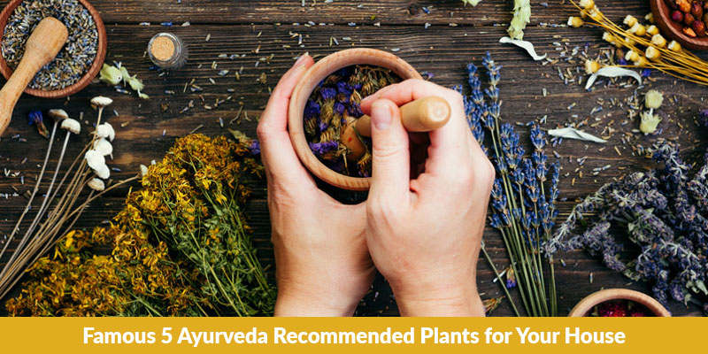 5 Ayurveda Recommended Plants for Your House