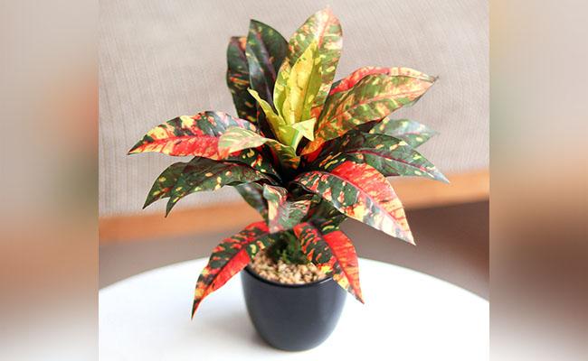 Artificial Croton Plant