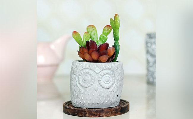 Artificial Rabbit Cactus